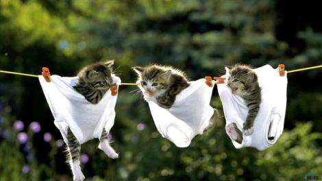 3222-funny-kittens-wallpaper
